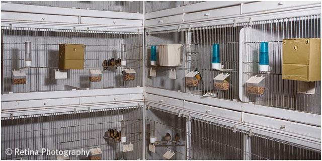 Breeding Cages of Gouldian Finch Breeder