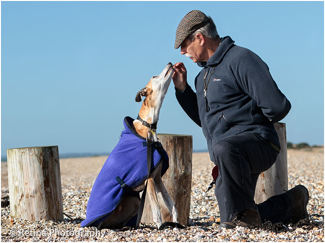 Short Haired Lurcher Dog With Trainer On Beach