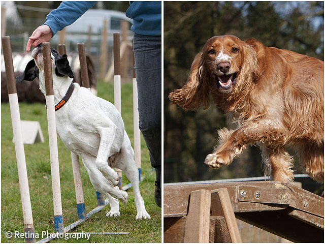 Dog Agility Weave And Long Beam