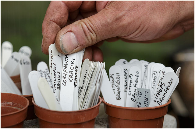 Close Up Of Mans Hand Arranging Plastic Plant Labels