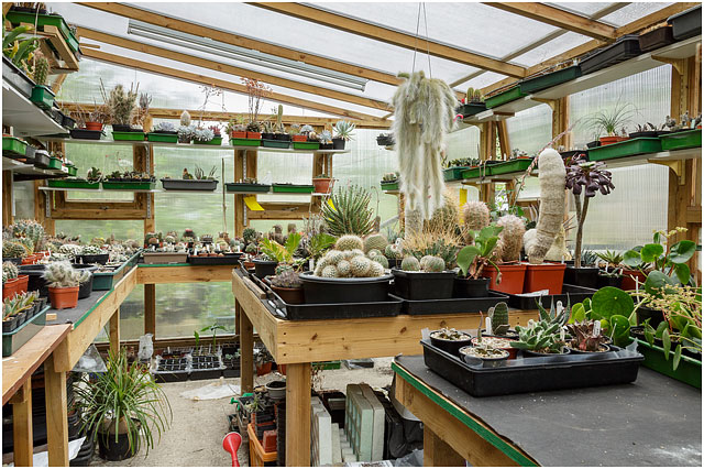 handmade greenhouse for large cacti and succulents collection