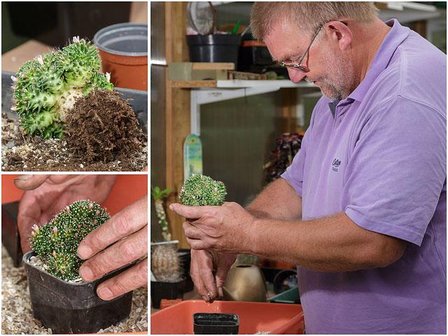 Repotting Cactus Plant into Larger Flower Pot