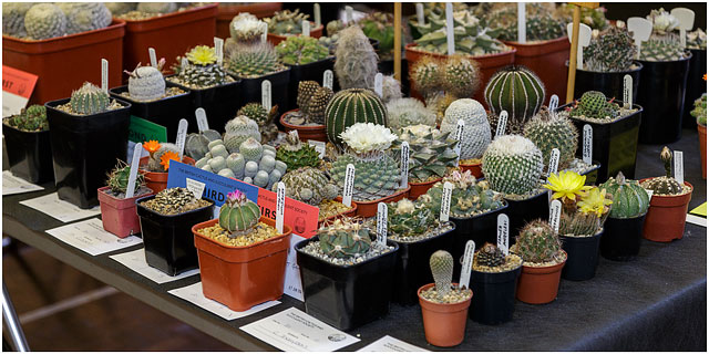 Portsmouth branch british cactus and succulent society show 2014