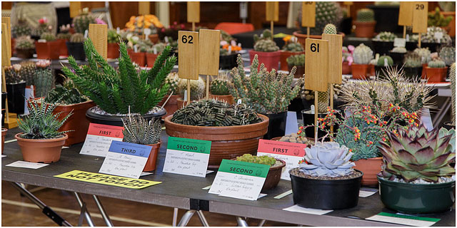 Collectors Entries At Portsmouth Branch British Cactus And Succulent Society Show 2014