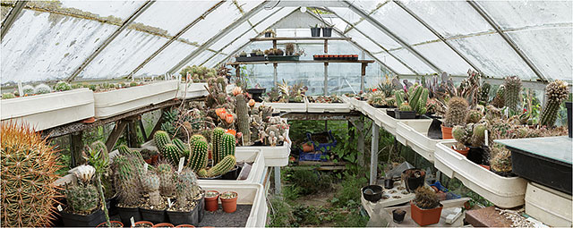 Wide Angle View Of Cactus Growing In A Greenhouse